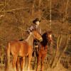 Good Horses Start 1